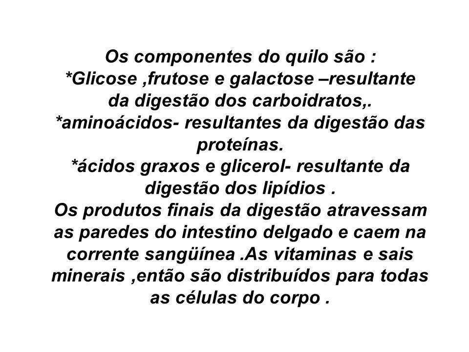Os componentes do quilo são :