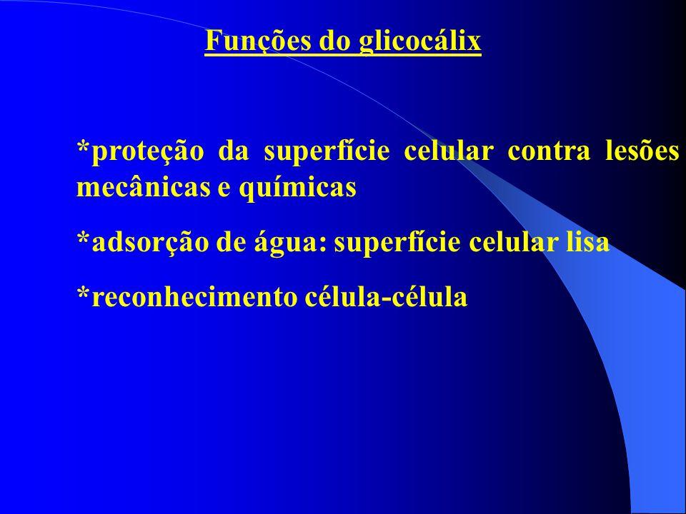 Funções do glicocálix *proteção da superfície celular contra lesões mecânicas e químicas. *adsorção de água: superfície celular lisa.
