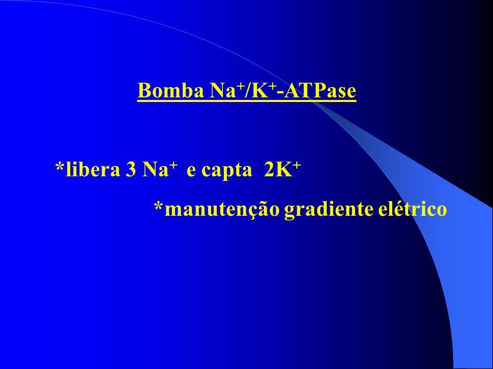 Bomba Na+/K+-ATPase *libera 3 Na+ e capta 2K+ *manutenção gradiente elétrico