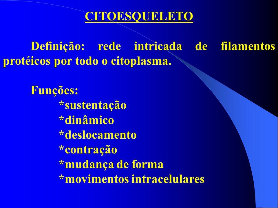 CITOESQUELETO Definição: rede intricada de filamentos protéicos por todo o citoplasma. Funções: *sustentação.