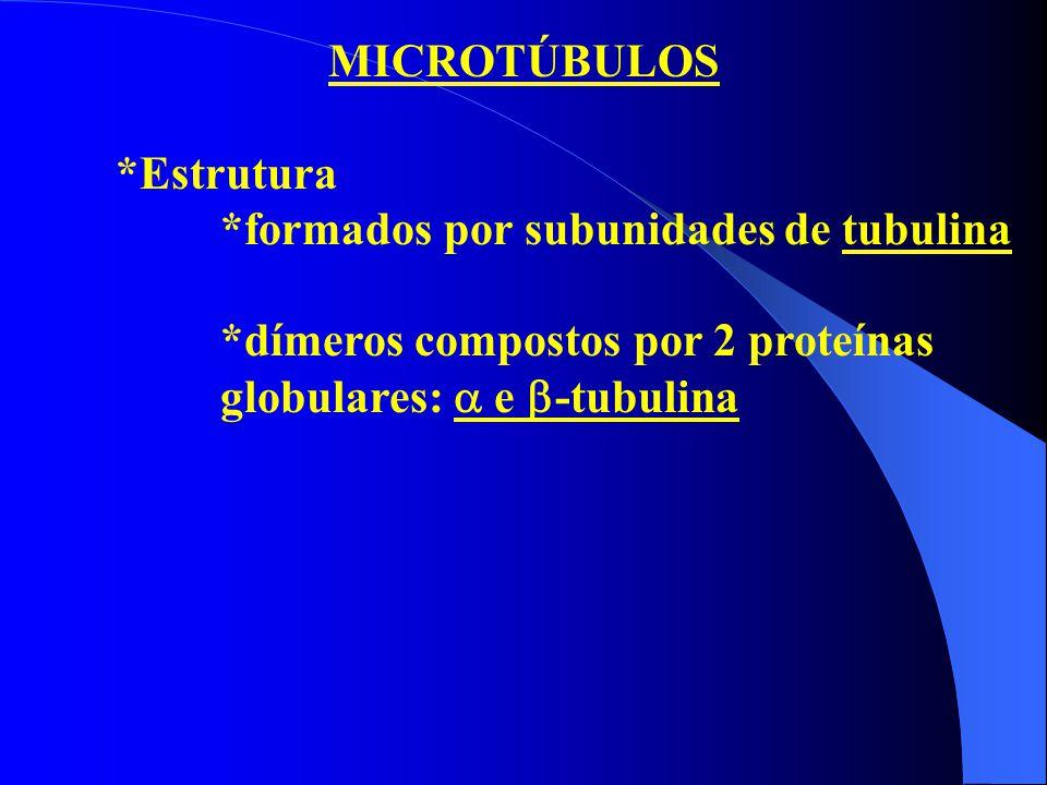 MICROTÚBULOS *Estrutura. *formados por subunidades de tubulina.