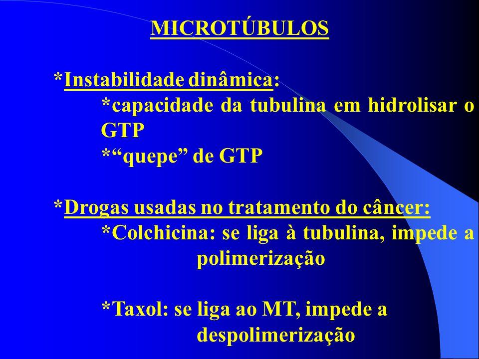 MICROTÚBULOS *Instabilidade dinâmica: *capacidade da tubulina em hidrolisar o GTP. * quepe de GTP.