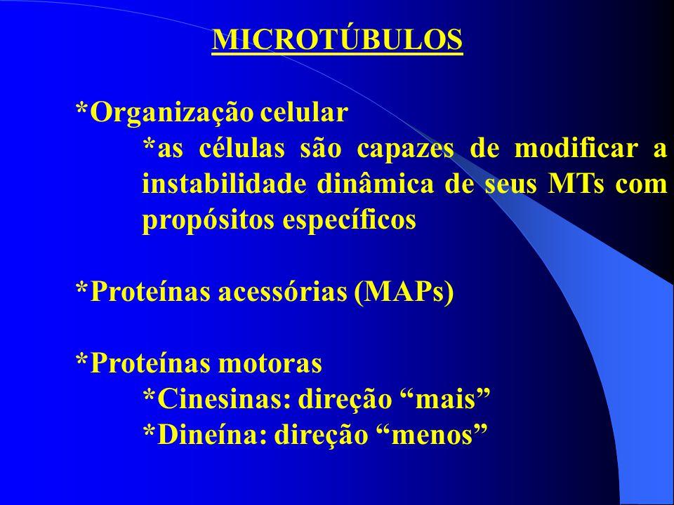 MICROTÚBULOS *Organização celular. *as células são capazes de modificar a instabilidade dinâmica de seus MTs com propósitos específicos.