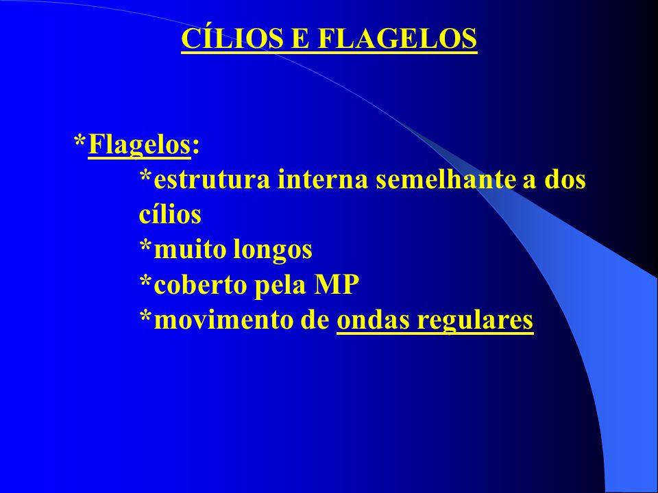 CÍLIOS E FLAGELOS *Flagelos: *estrutura interna semelhante a dos cílios. *muito longos. *coberto pela MP.