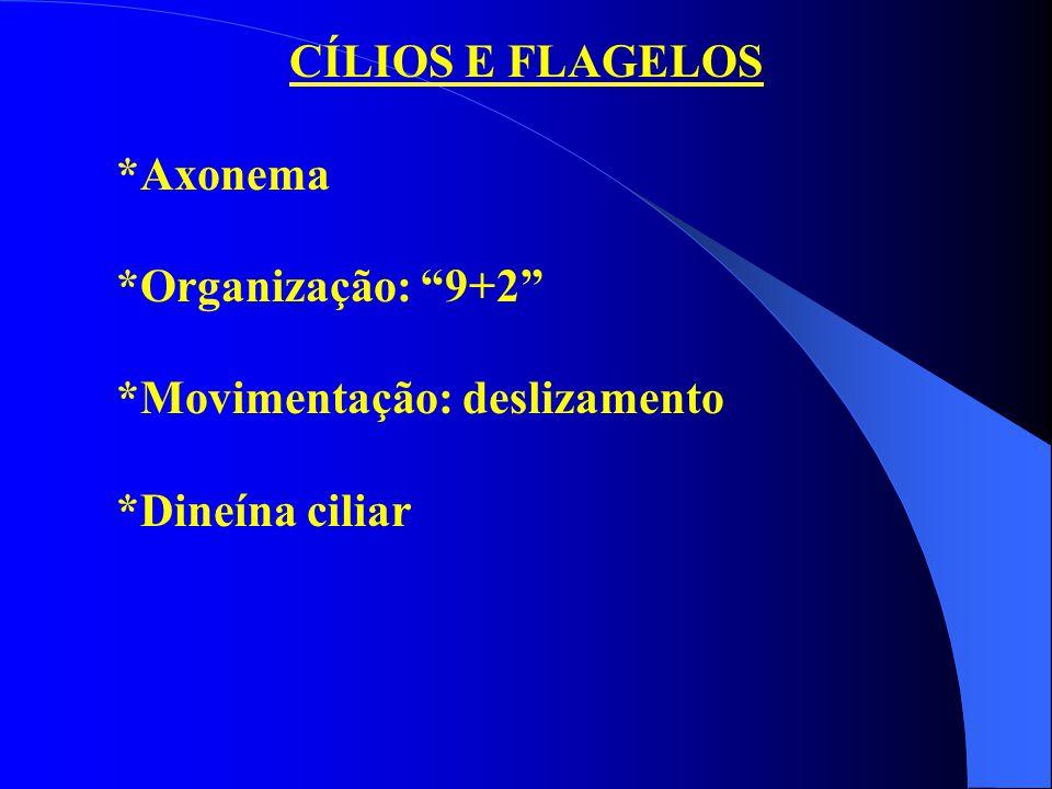 CÍLIOS E FLAGELOS *Axonema *Organização: 9+2 *Movimentação: deslizamento *Dineína ciliar