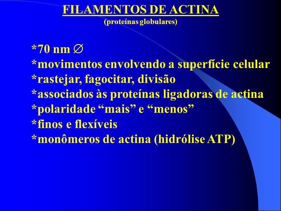 (proteínas globulares)