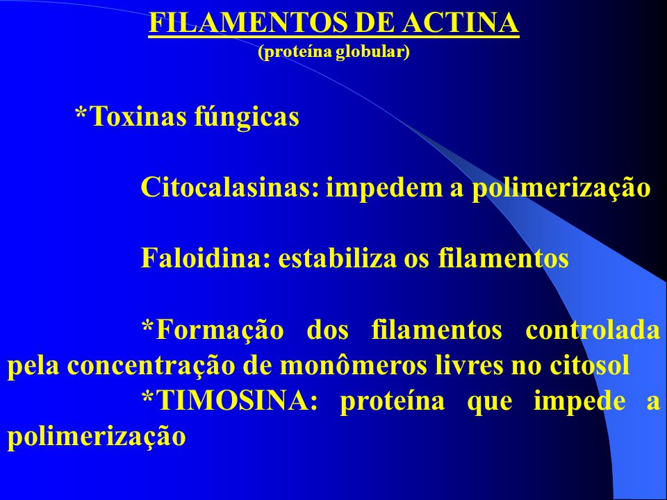 Citocalasinas: impedem a polimerização