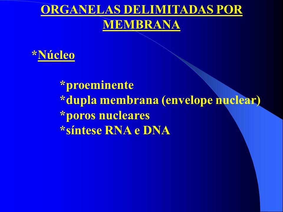 ORGANELAS DELIMITADAS POR MEMBRANA