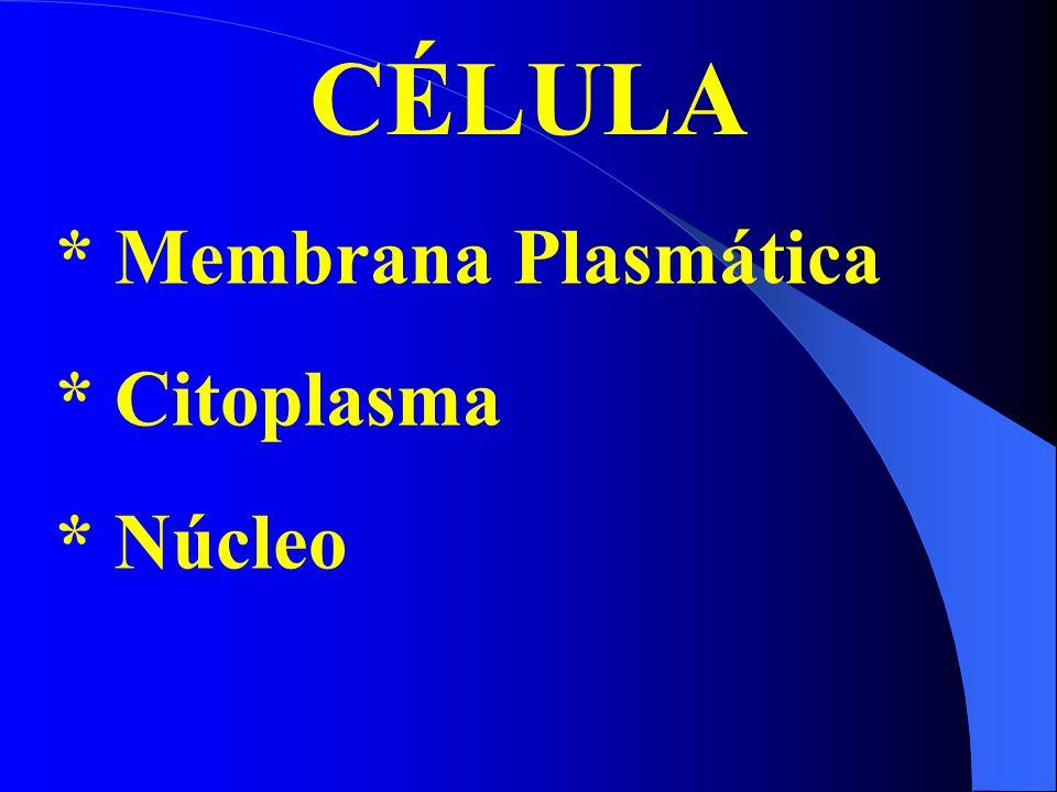 CÉLULA * Membrana Plasmática * Citoplasma * Núcleo
