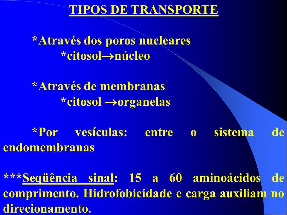 TIPOS DE TRANSPORTE *Através dos poros nucleares. *citosolnúcleo. *Através de membranas. *citosol organelas.