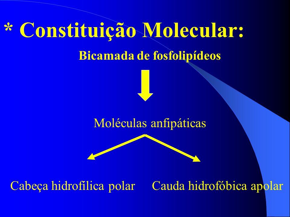 Bicamada de fosfolipídeos