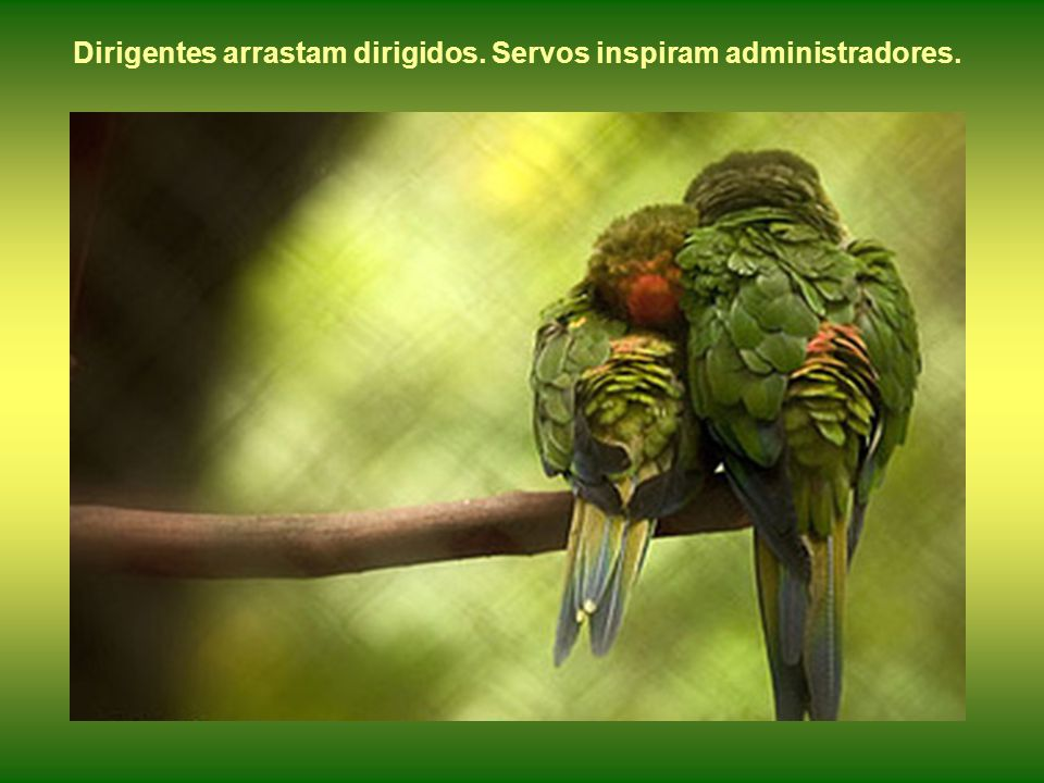 Dirigentes arrastam dirigidos. Servos inspiram administradores.