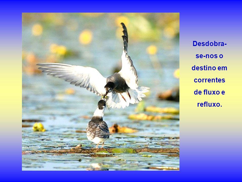 Desdobra-se-nos o destino em correntes de fluxo e refluxo.