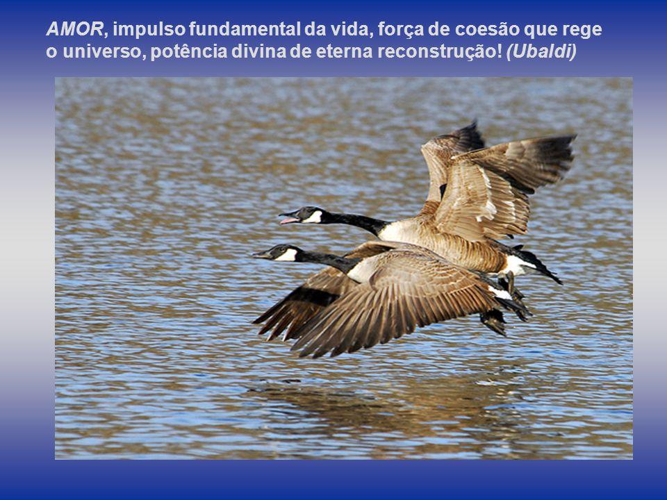 AMOR, impulso fundamental da vida, força de coesão que rege o universo, potência divina de eterna reconstrução.