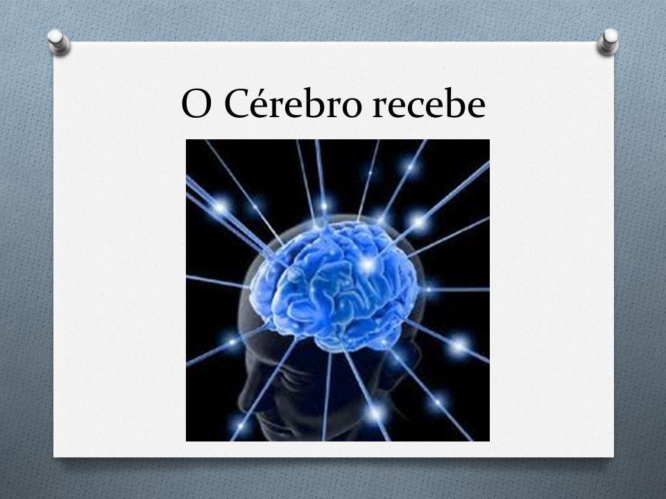 O Cérebro recebe
