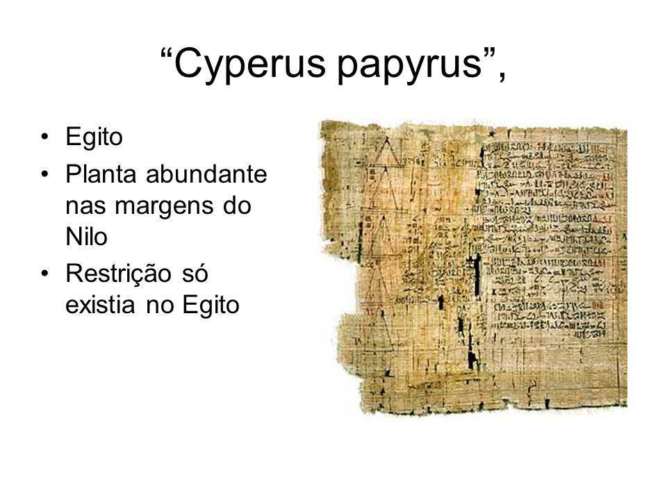 Cyperus papyrus , Egito Planta abundante nas margens do Nilo