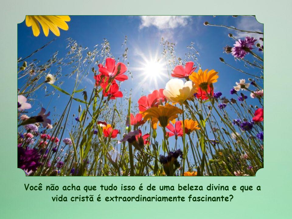 Você não acha que tudo isso é de uma beleza divina e que a vida cristã é extraordinariamente fascinante