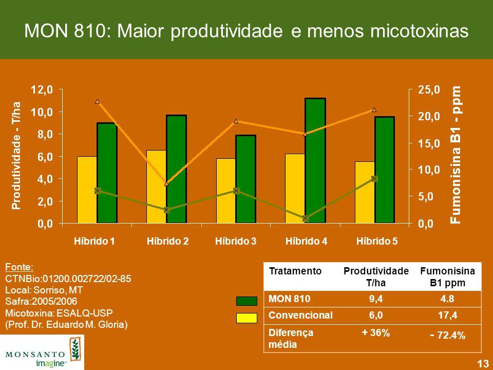 MON 810: Maior produtividade e menos micotoxinas