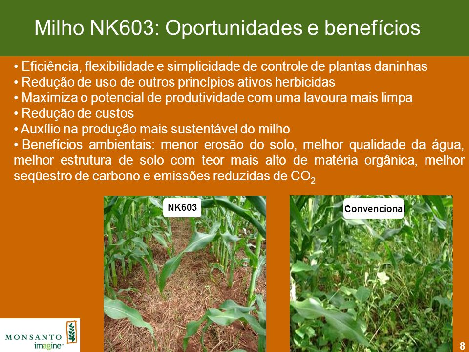 Milho NK603: Oportunidades e benefícios