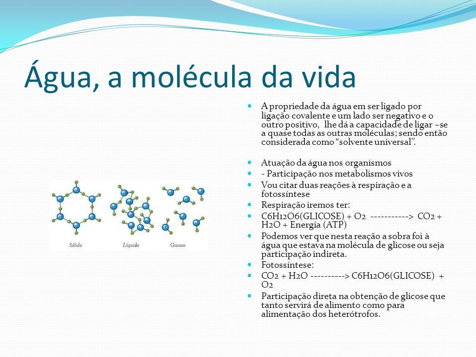 Água, a molécula da vida