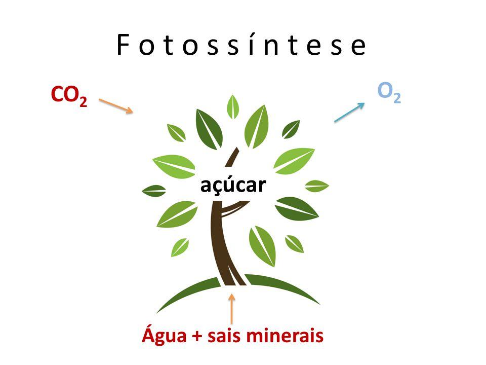 F o t o s s í n t e s e O2 CO2 açúcar Água + sais minerais