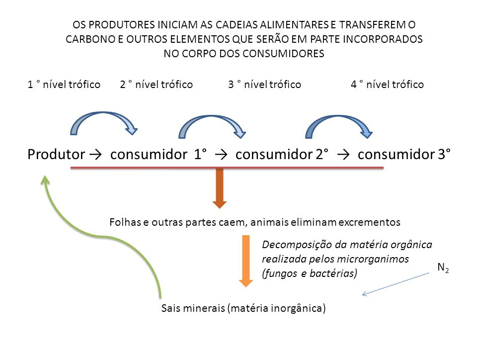 Produtor → consumidor 1° → consumidor 2° → consumidor 3°