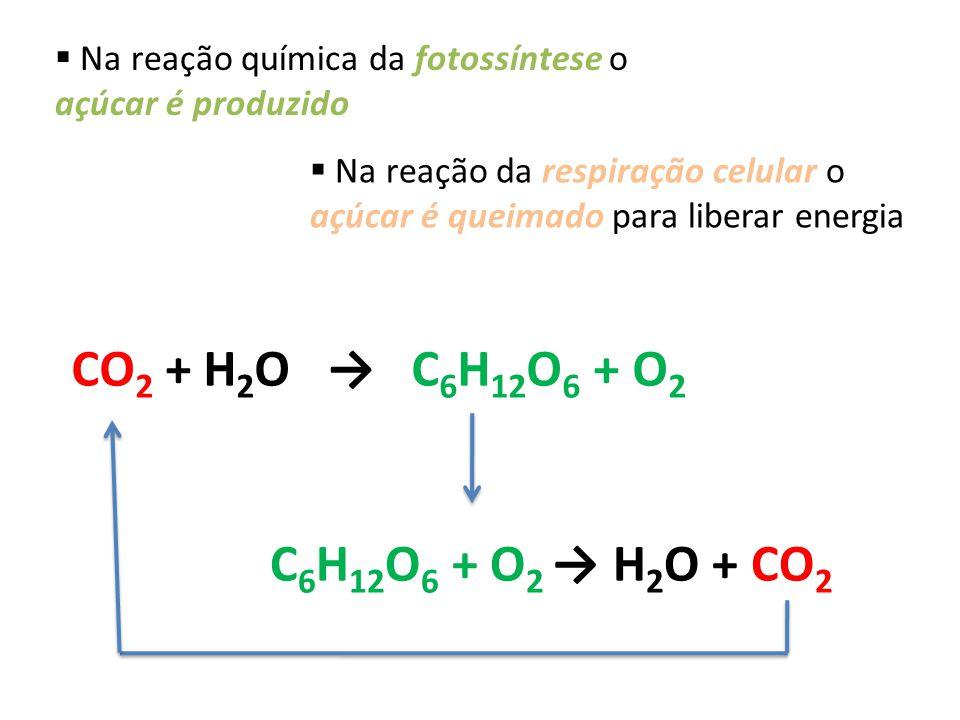 CO2 + H2O → C6H12O6 + O2 C6H12O6 + O2 → H2O + CO2