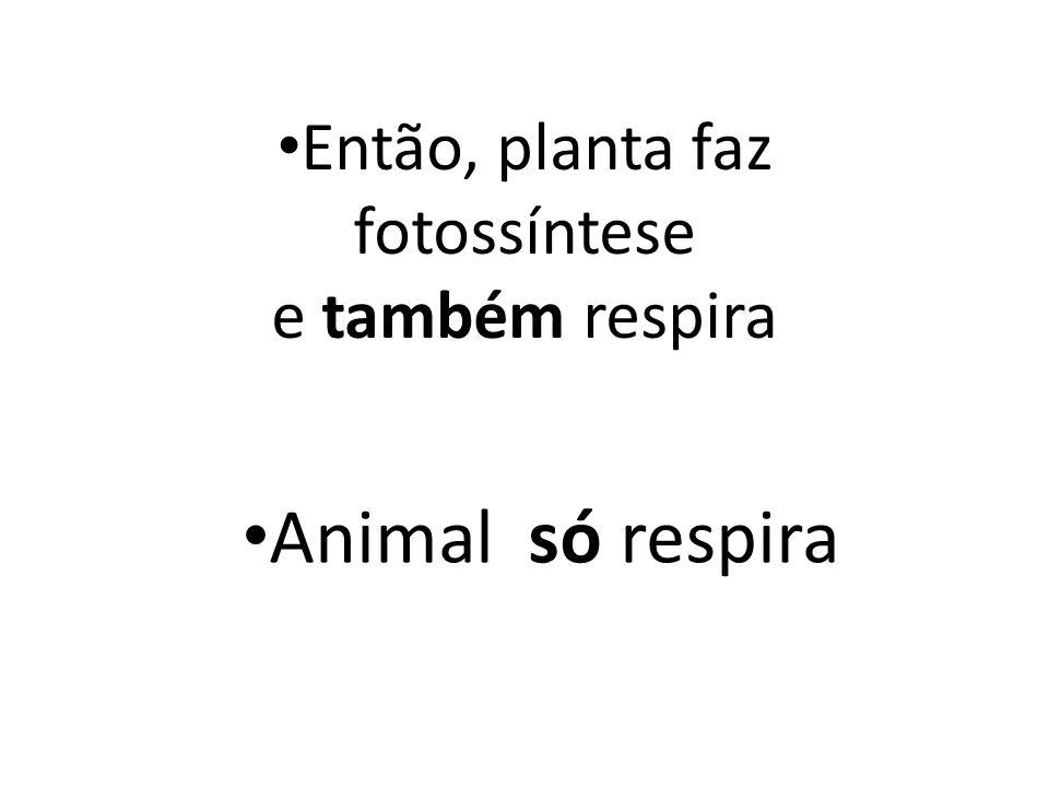 Então, planta faz fotossíntese e também respira Animal só respira