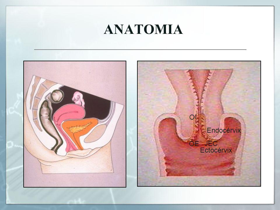 ANATOMIA OI Endocérvix OE JEC Ectocérvix