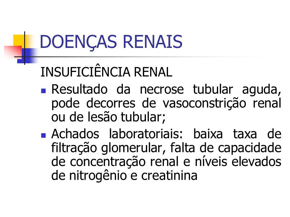 DOENÇAS RENAIS INSUFICIÊNCIA RENAL