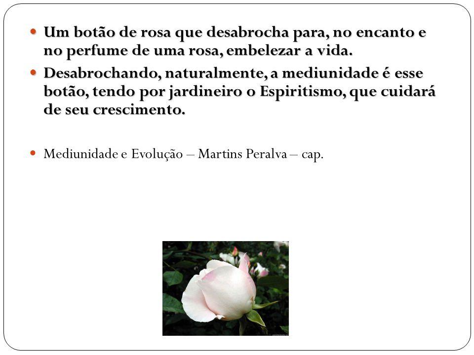 Um botão de rosa que desabrocha para, no encanto e no perfume de uma rosa, embelezar a vida.