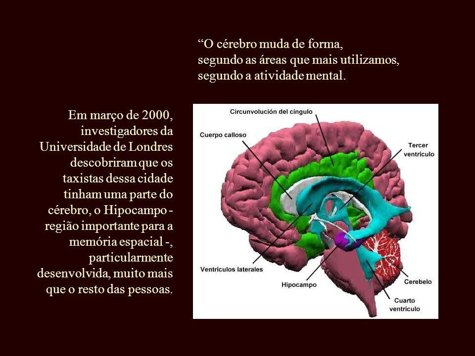 O cérebro muda de forma,