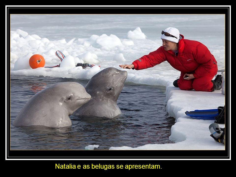 Natalia e as belugas se apresentam.