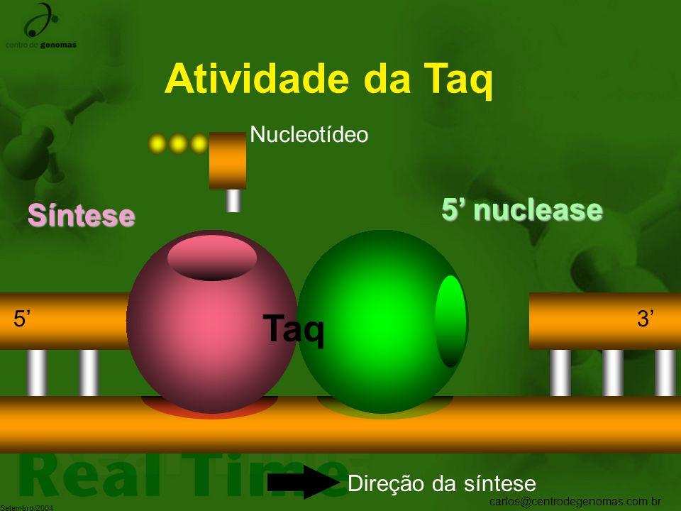 Atividade da Taq Taq 5' nuclease Síntese Nucleotídeo 5' 3'