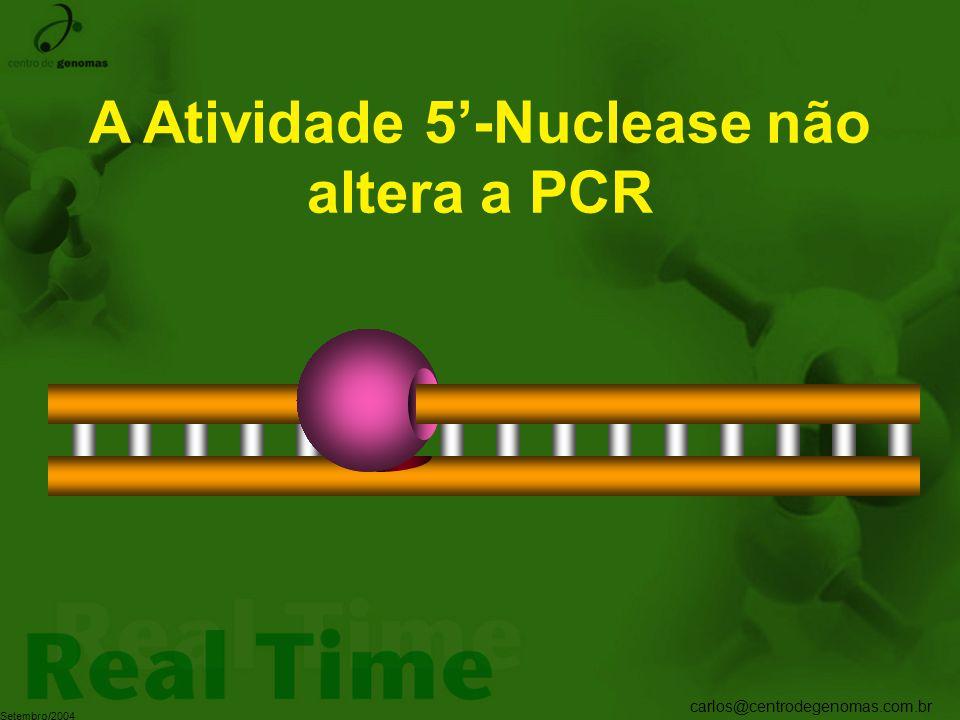 A Atividade 5'-Nuclease não altera a PCR