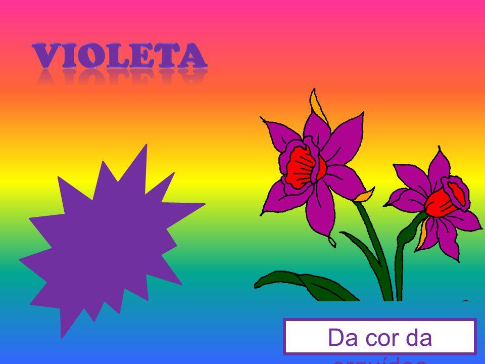 violeta Da cor da orquídea