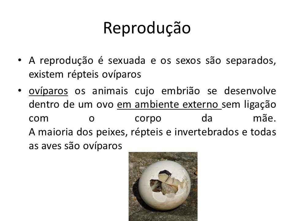 Reprodução A reprodução é sexuada e os sexos são separados, existem répteis ovíparos.
