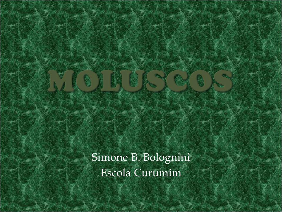 Simone B. Bolognini Escola Curumim