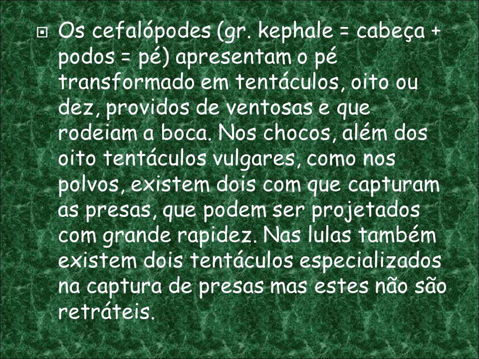 Os cefalópodes (gr.
