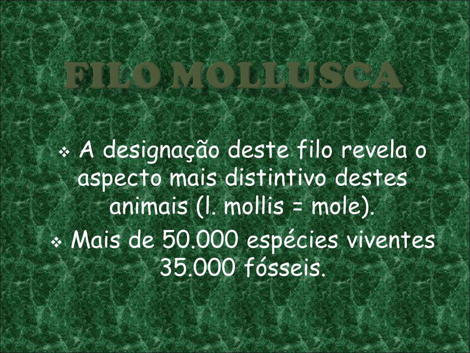 Mais de 50.000 espécies viventes 35.000 fósseis.