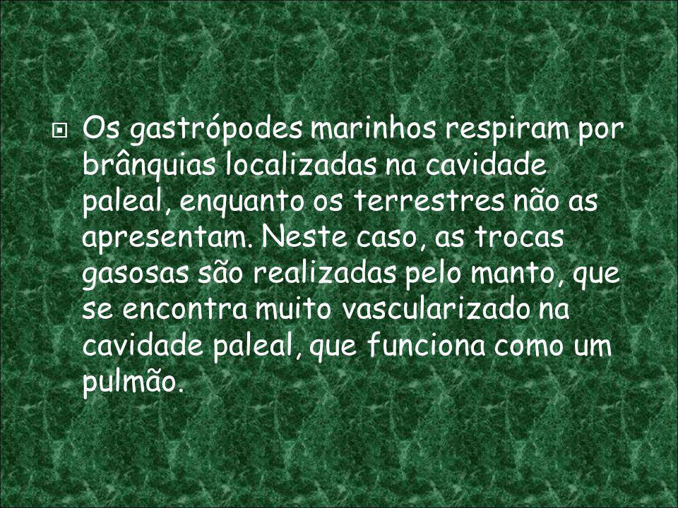 Os gastrópodes marinhos respiram por brânquias localizadas na cavidade paleal, enquanto os terrestres não as apresentam.