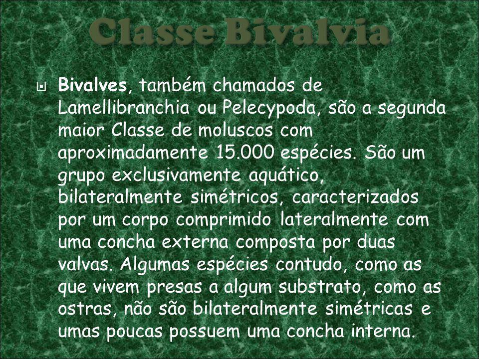 Classe Bivalvia