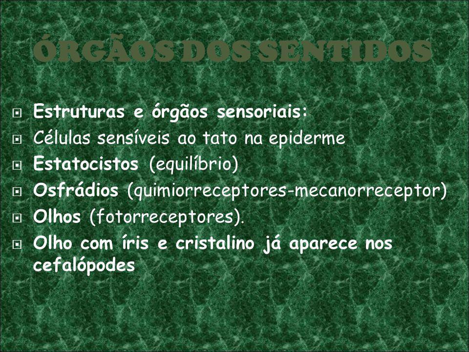 ÓRGÃOS DOS SENTIDOS Estruturas e órgãos sensoriais: