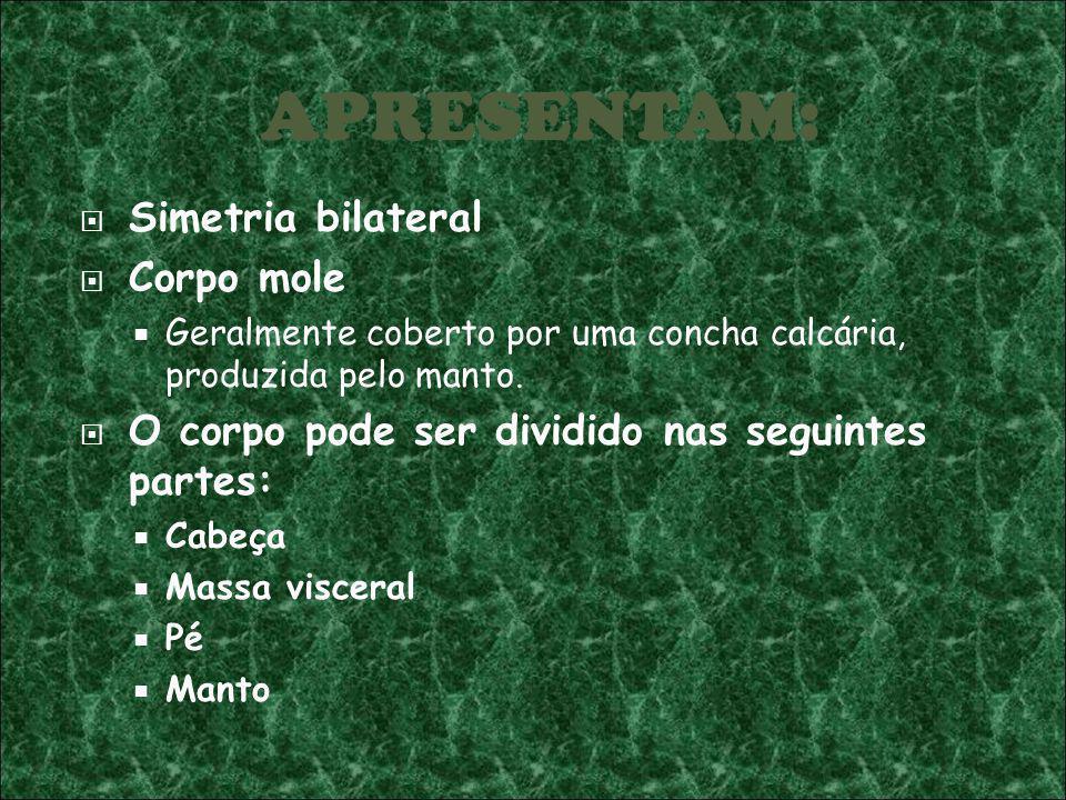 APRESENTAM: Simetria bilateral Corpo mole