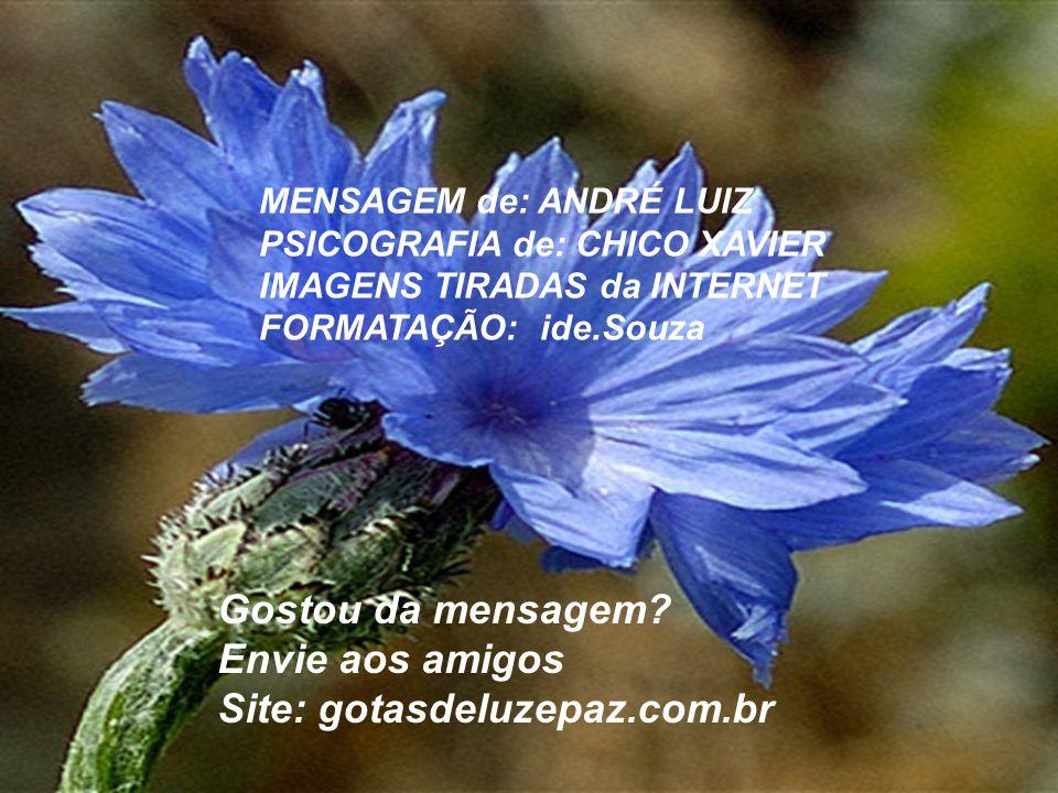 Site: gotasdeluzepaz.com.br