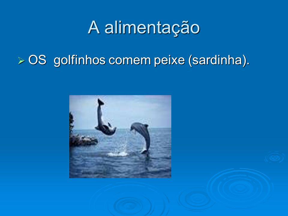 A alimentação OS golfinhos comem peixe (sardinha).
