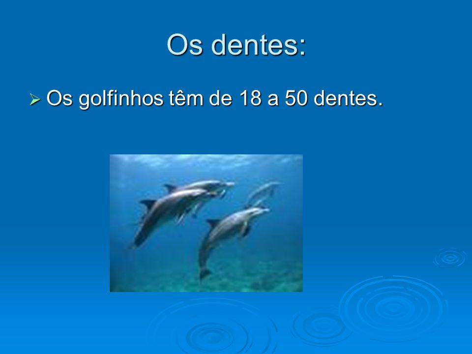 Os dentes: Os golfinhos têm de 18 a 50 dentes.