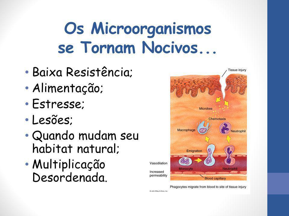 Os Microorganismos se Tornam Nocivos...