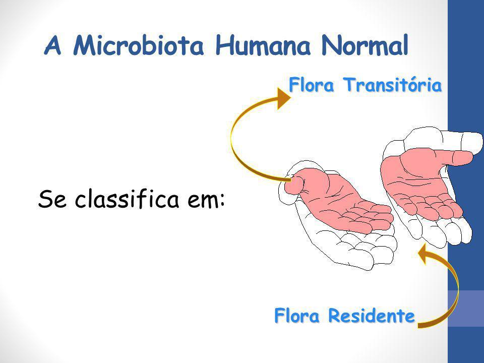 A Microbiota Humana Normal