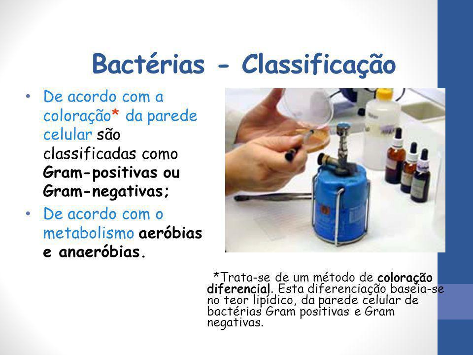 Bactérias - Classificação